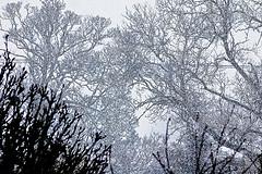 snowy_march